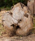 Cut surface old log Stock Photos