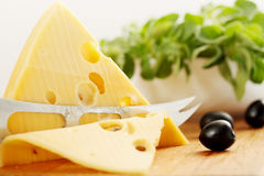 Cut  Swiss cheese. A large piece of  Swiss cheese and black olives Stock Image