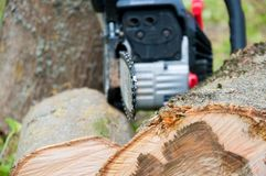 Cut thick tree trunk. Wood texture. Chainsaw cuts wood. Cut thick tree trunk. Wood texture. Stump. Chainsaw cuts wood stock images
