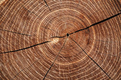 Cut timber with growth rings Stock Photography