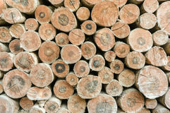 Cut timber Stock Images