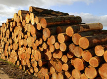 Cut Timber Royalty Free Stock Images