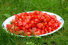 Cut tomatos in the gras Stock Photo