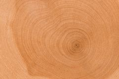 Cut of tree. A cut of a tree with concentric rings Royalty Free Stock Photo