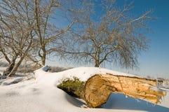 The cut tree. Royalty Free Stock Photos