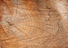 Cut Tree Royalty Free Stock Image