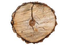 Cut tree Stock Image