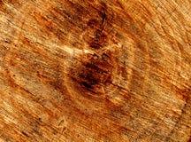 Cut tree stock photos