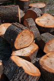 Cut tree trunk Stock Images