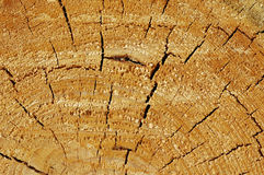 Cut of tree Royalty Free Stock Images