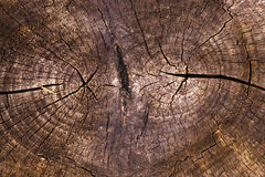 The cut tree Royalty Free Stock Image