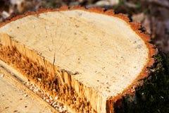 Cut a tree Stock Photos