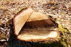 Cut a tree Royalty Free Stock Photo