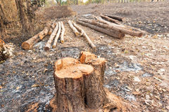 Free Cut Tree Stock Photography - 69652752