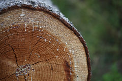 Cut tree. A trunk cut cropped with green background Stock Photography