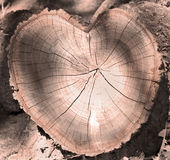 Cut of a tree as a heart royalty free stock photo
