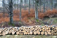 Cut tree Stock Photography