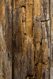 Cut tree background Stock Images