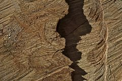A cut of a tree for a background. Or textures Stock Images