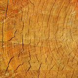 Cut of a tree. Cut of a big tree stock photography