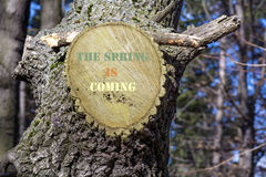 Cut tree branch  with sign The spring is coming Stock Images
