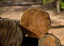 Cut tree branches on a pile in detail I. Cut tree branches on a pile in detail with bokeh background stock image