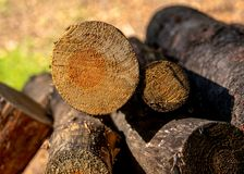 Cut tree branches on a pile in detail II. Cut tree branches on a pile in detail with bokeh background stock photography