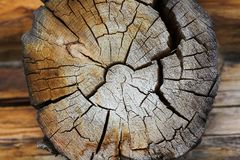 Cut tree close-up Stock Images