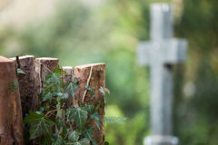 Cut tree with cross. A cut tree with a cross in the background Royalty Free Stock Photography