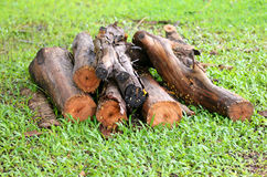 Cut a tree Royalty Free Stock Image