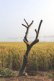 Cut tree on field,vintage Stock Image
