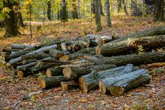 Cut tree on a ground in a park royalty free stock photo