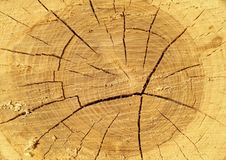Cut of a tree with growth rings, age of a tree royalty free stock photography