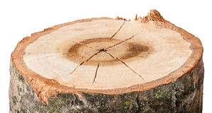 The cut tree horizontal royalty free stock photography