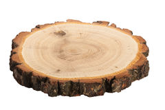 Cut of tree. Isolated cut of tree on white background Royalty Free Stock Photo