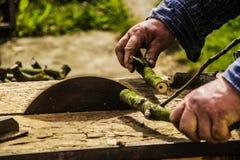 Cut tree limbs. Cut tree limb no safe tool Royalty Free Stock Photo