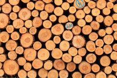 Cut tree log Royalty Free Stock Photography