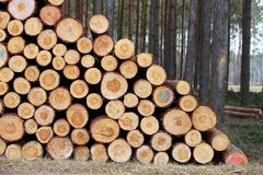 Cut tree log Stock Photo