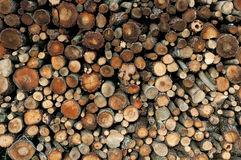 Cut tree logs Royalty Free Stock Image