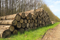 Cut tree logs in a forest stacked next to a pathway Stock Photos