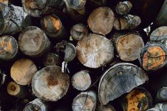 Cut tree logs piled up in forest Stock Photo