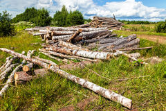 Cut tree logs piled up near a forest road Royalty Free Stock Photography