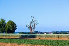 Cut tree Royalty Free Stock Photography