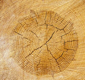 The cut tree Royalty Free Stock Photos