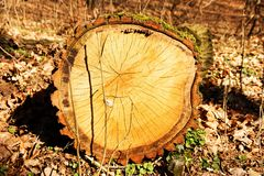 Cut a tree Stock Images