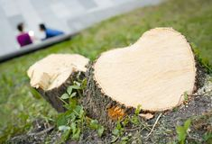 Cut of a tree in the shape of a heart stock image
