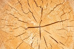 Tree Circle Patterns of Annual Growth. Royalty Free Stock Image