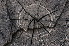 Cut tree. The cut of the tree is similar to the streets of Paris Royalty Free Stock Photography