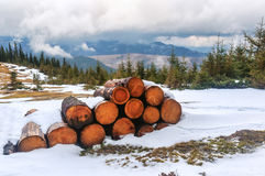 Cut tree on the snow Royalty Free Stock Photography