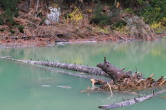 Cut tree standing in the lake in Rugova, Kosovo Royalty Free Stock Photography